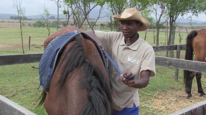 Horses for Hope 1