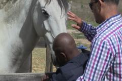 Horses for Hope 33