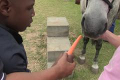 Horses for Hope 60