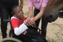 Horses for Hope 66