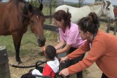 Horses for Hope 67